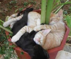 cat, funny, and plants image