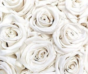 tumblr and white roses image