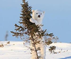 Polar Bear, animal, and bear image