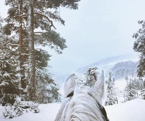 dreamy, equestrian, and freedom image