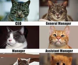 cats, feline, and funny image