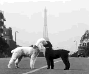 adorable, black and white, and eiffel tower image
