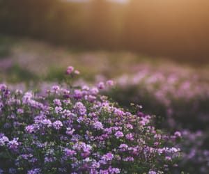 flower, happy happiness, and purple image