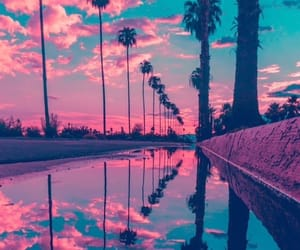photography, pink, and trees image
