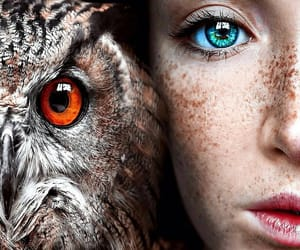 owl and eyes image