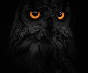 black, eye, and schwarz image