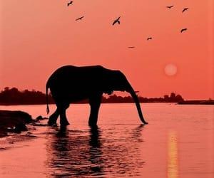 animal, pink, and Éléphant image