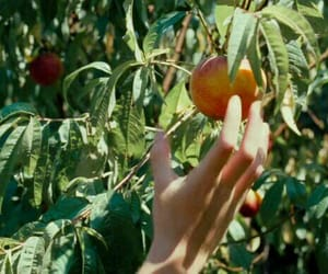 call me by your name, peach, and armie hammer image