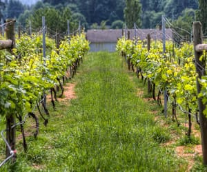 country life, cozy place, and vineyard image