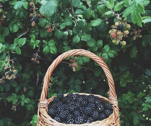 blackberry, country life, and country summer image