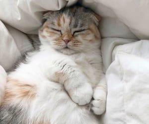 cat, love, and animals image