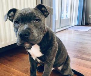 dog, grey, and photography image