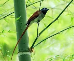Animales, bird, and pajaro image