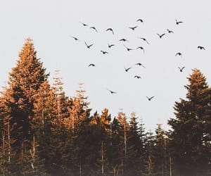 forest, autumn, and birds image