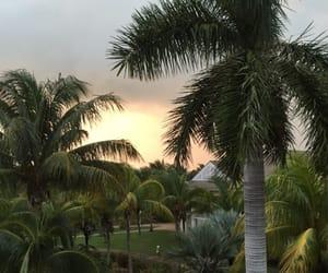 palms, nature, and sunset image