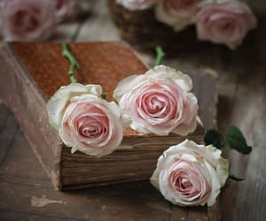 book, roses, and vintage image