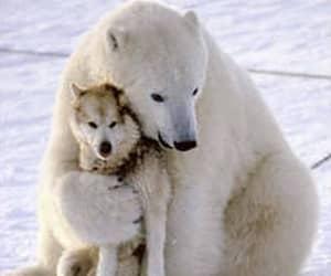 animal, bear, and dog image