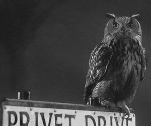 harry potter, privet drive, and owl image