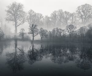 reflection and trees image