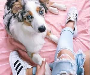 dog, jeans, and spring image