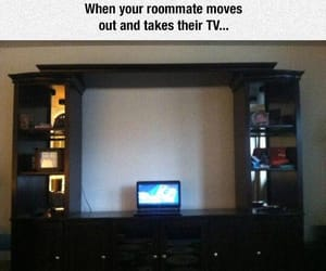 funny and funny pictures image