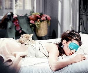 cat, girly, and relax image