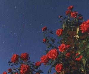 cielo, rosa, and rose image