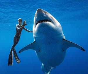 ocean, shark, and underwater image