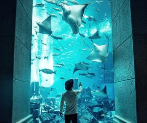 aquarium, blue water, and Dubai image