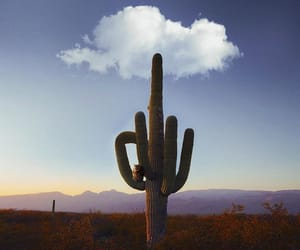 cactus, clouds, and nature image
