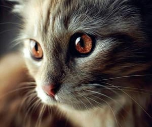 cute kitty, gato, and tabby cat image