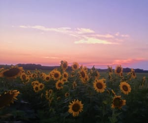 flowers, sky, and summer image