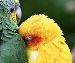 animals, birds, and so cute image