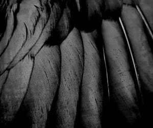 black, feather, and Darkness image