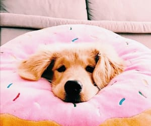 candy, dogs, and doughnuts image
