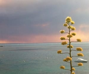sky, flowers, and sunset image
