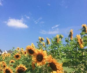 blue, retro, and sunflowers image