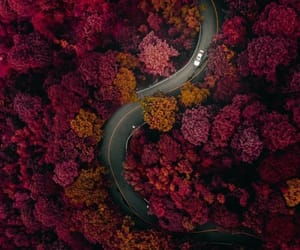 aerial photography, aerial view, and autumn image