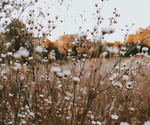 flowers, aesthetic, and field image
