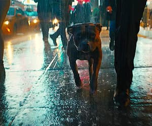gif, loyal af, and fight for animal rights image