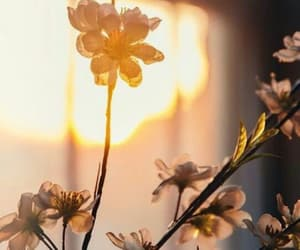 flower, morning, and sun image