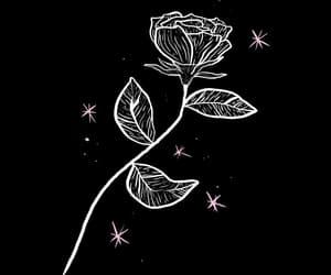 rose, wallpaper, and black image