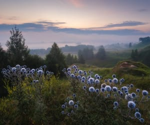 blue, flowers, and landscape image