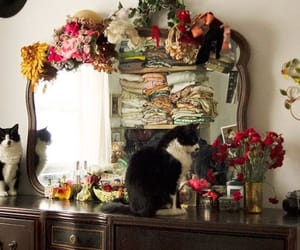 cat, room, and dresser image