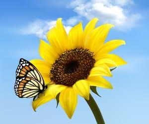 beautiful, flower, and photo image