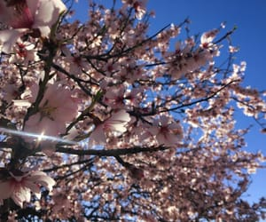 korea, pink, and cherry image