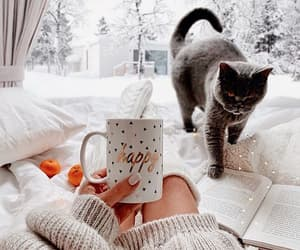 cat, coffee, and snow image