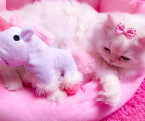 adorable, fluffy, and kitten image