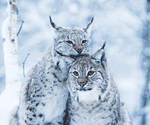 winter, animals, and snow image