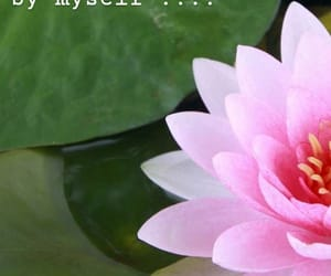 flower, wallpaper, and famous quote image